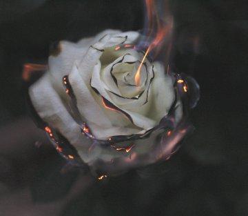 Burning Insight