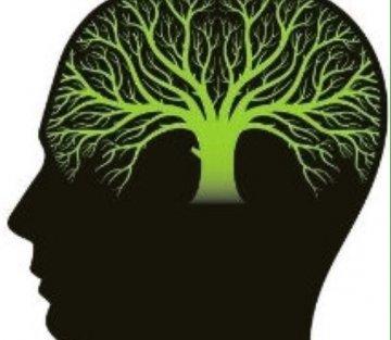 How to Overcome a False Growth Mindset