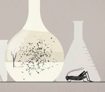 What an Insect Can Teach Us About Adapting to Stress