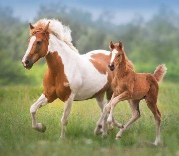 Doffing Our Inner Masks: Lessons from Horses