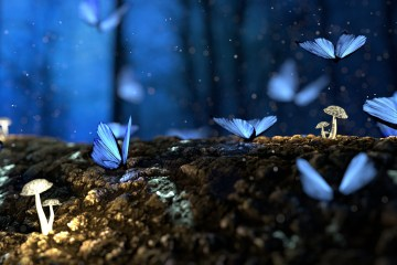 Mushrooms and butterflies