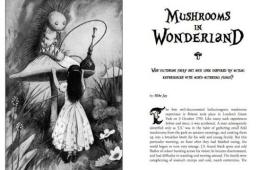 Darklore 7 - Mushrooms in Wonderland