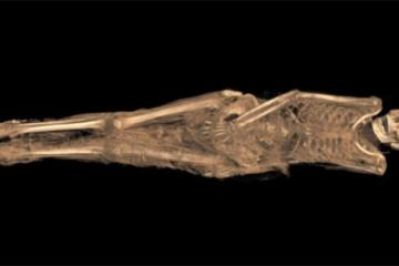 1300-year-old Tattooed Sudanese Mummy