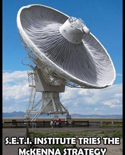 Shroom satellite dish