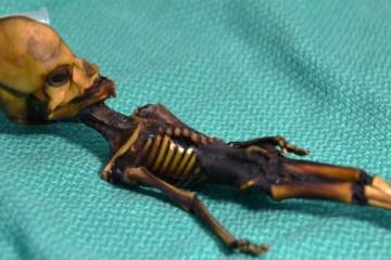 Atacama 'Alien Mummy'