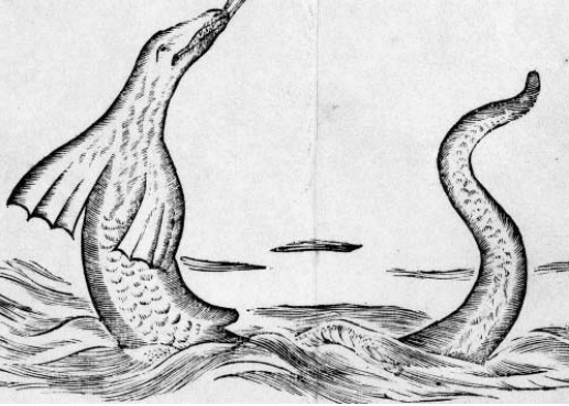 Sea serpent as depicted in Egede book