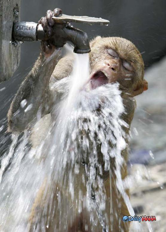 Thirsted Monkey