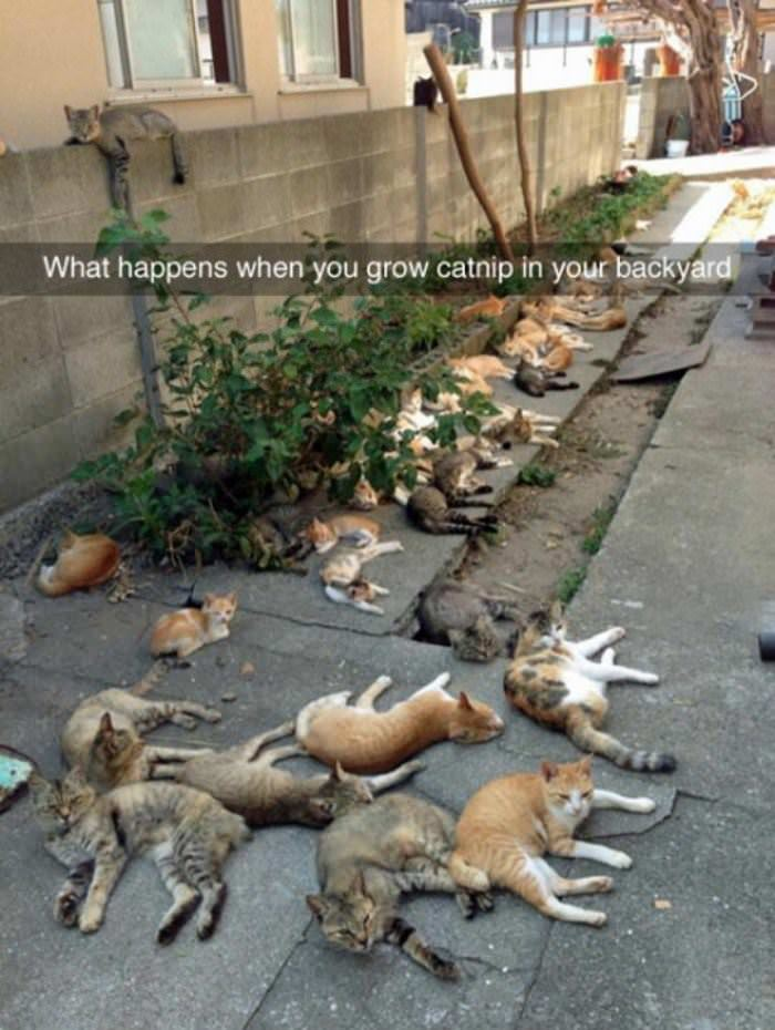 when you grow catnip Catnip Party