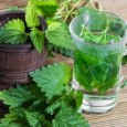 Health Benefits of Nettle