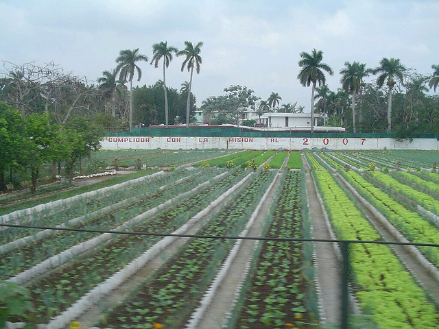 By 2006, when this picture was taken, urban farms such as this converted soccer field in the middle of Havana were supplying the city with 90% of its produce while using virtually no petroleum products. (Photo by Dave Williams/Flickr)