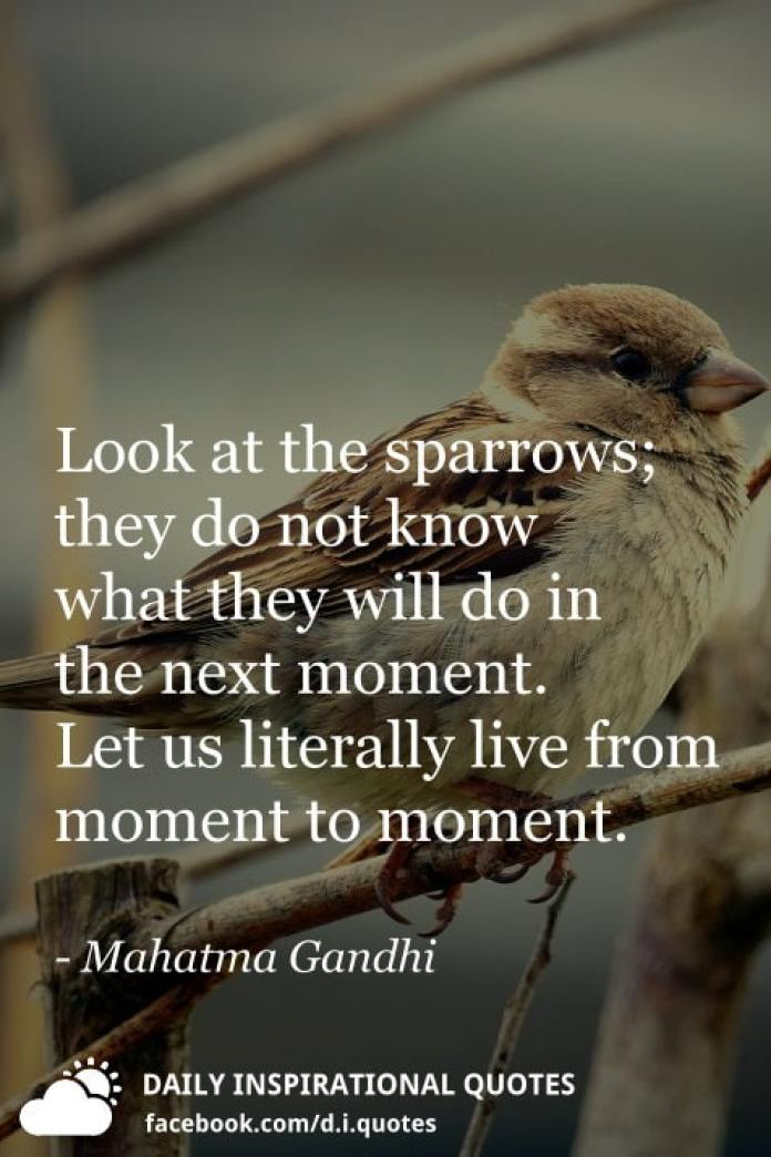 Look at the sparrows; they do not know what they will do in the next moment. Let us literally live from moment to moment. - Mahatma Gandhi
