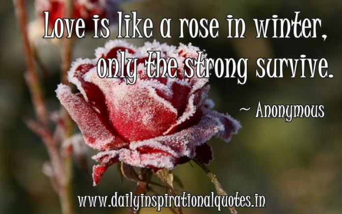 Love is like a rose in winter, only the strong survive. ~ Anonymous