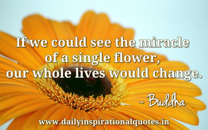 If we could see the miracle of a single flower, our whole lives would change. ~ Buddha