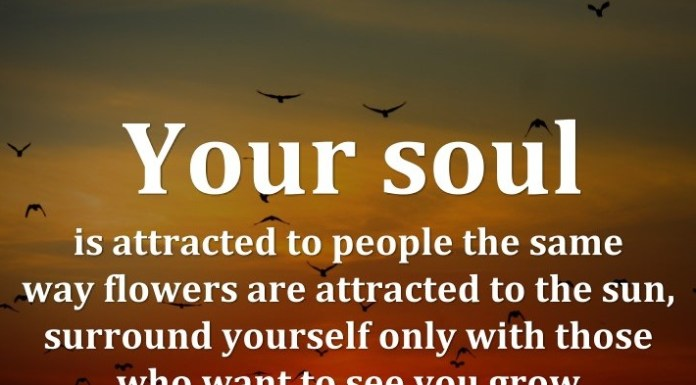 Your soul is attracted to people the same way flowers are attracted to the sun, surround yourself only with those who want to see you grow.