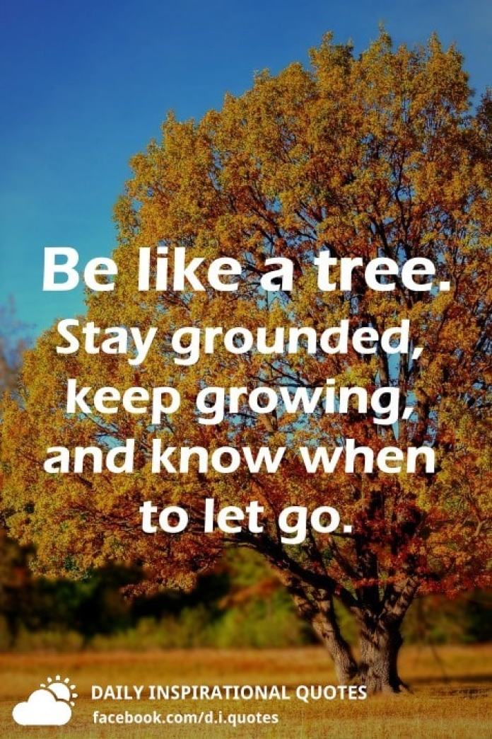 Be like a tree. Stay grounded, keep growing, and know when to let go.