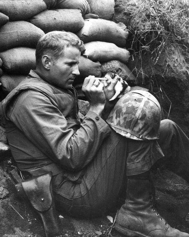 When Marine Sergeant Frank Praytor fed a 2 week-old kitten after her mother was killed