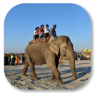 Elephant Ride at Dwijing
