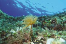 diving-sea-optimized-for-web-indux-media-doo-1