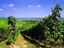 """""""moselle valley vineyards in the boder area between Germany, France and Luxembourg"""""""