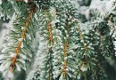 [Sélection] Nos favoris de l'hiver 2017