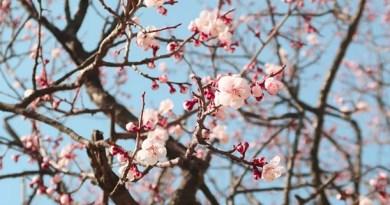 [Sélection] Nos favoris du printemps 2018