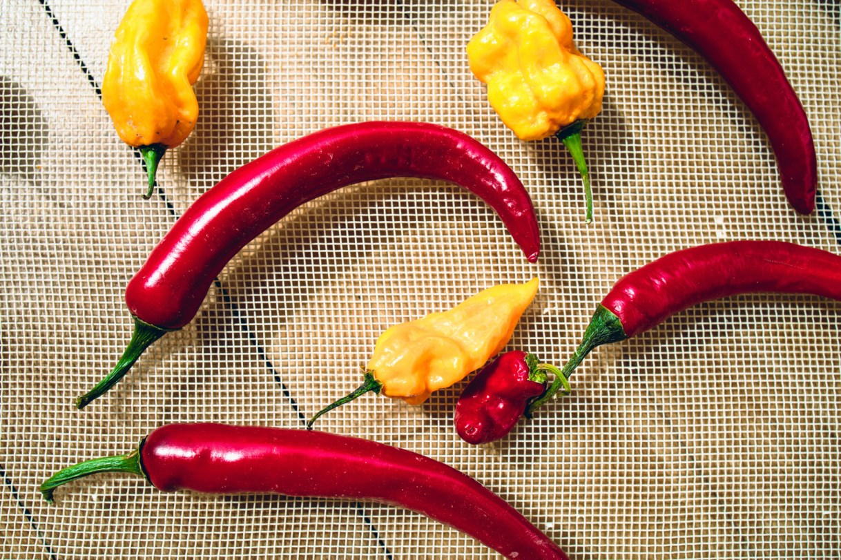 Red and yellow or orange chili peppers dry in the sun in a net tray. (Getty Images)