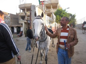 """Mahmoud Ahmed, standing besides """"the boss"""", one of the two horses he sold to keep his business running Adham Roshdy"""