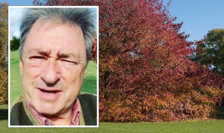 'Give this a go!' Alan Titchmarsh shares perfect tree to plant for 'autumn colour'