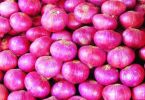 Onion Farming Business In Nigeria