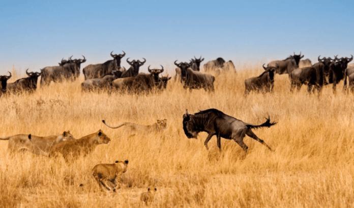 How wildlife in Africa will get hit by coronavirus pandemic