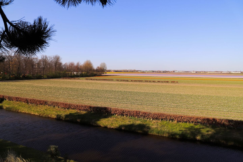Keukenhof tiplip fields