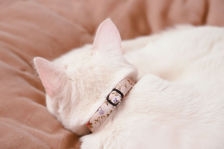 DIY cat collar