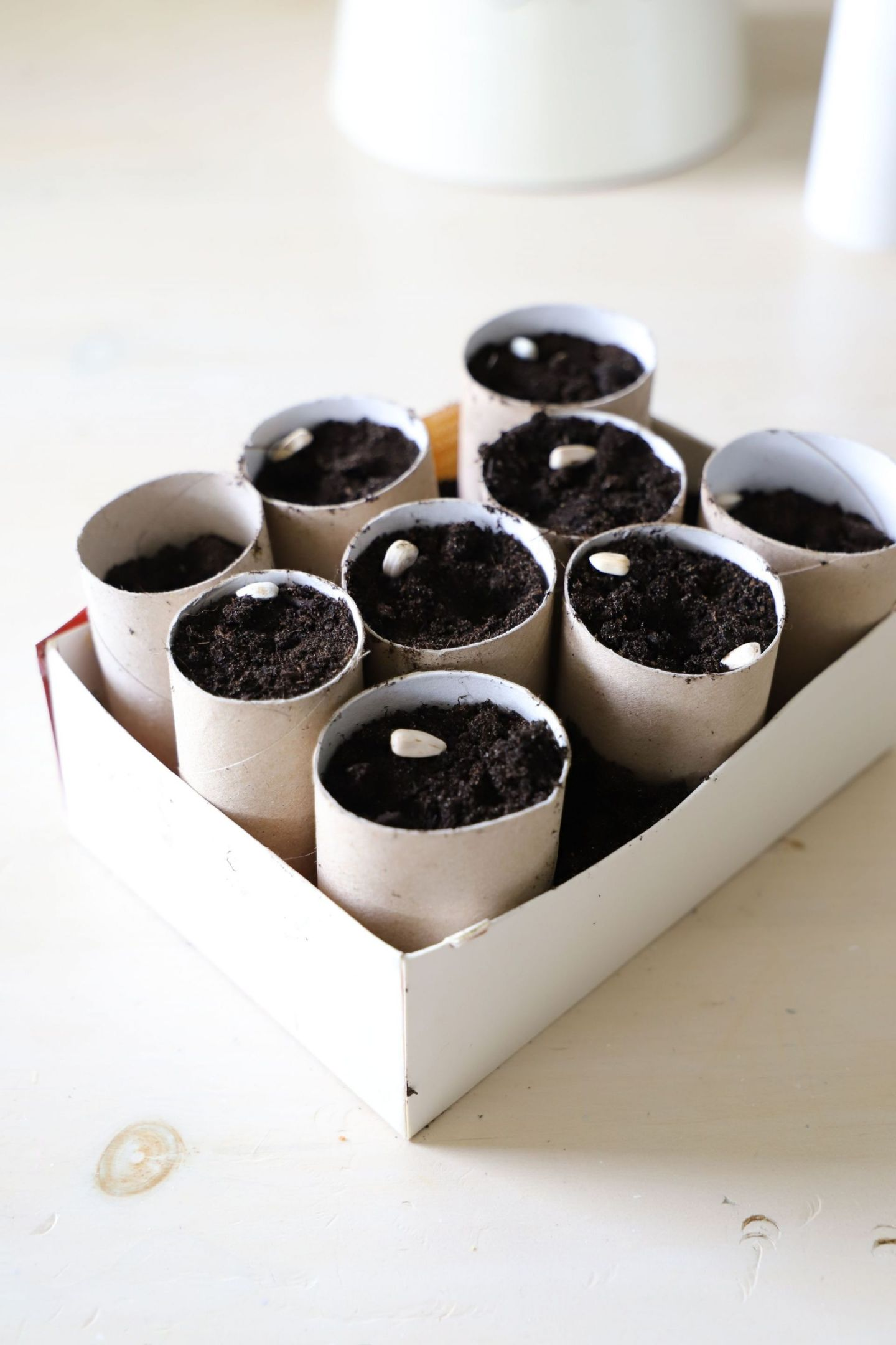 how to use toilet rolls for seeds