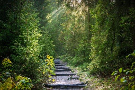 Neuer Weg führt in einen mystischen Wald. Neue Wege faszinieren und verängstigen
