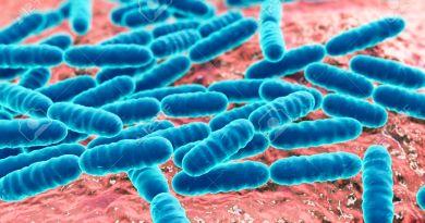 Οξυγαλακτικά Βακτήρια? Ποιά είναι τελικά?