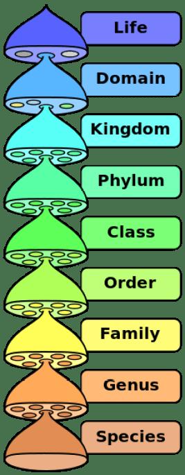 Ονοματολογία μικροοργανισμών? Μα είναι τόσο εύκολο!
