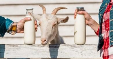 Κατσικίσιο γάλα – Πόσο καλά το ξέρουμε?