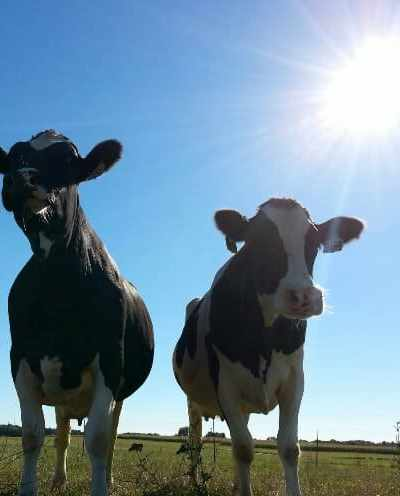 Wisconsin Dairy Farm response to Mercy For Animals