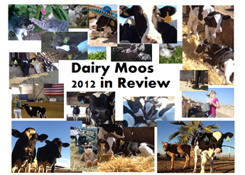 Dairy Moos 2012 in Review
