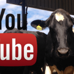 Viral Videos Show the Nature of Cows