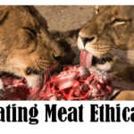 Is Eating Meat Ethical