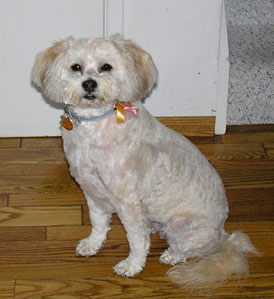 ms. do and her new hair cut!