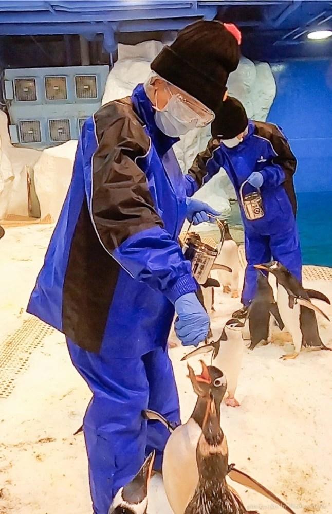 餵企鵝體驗 海生館企鵝飼育員, 海生館活動, 屏東海生館, 海生館企鵝, 海生館極地區, Klook我與企鵝的0.1毫米
