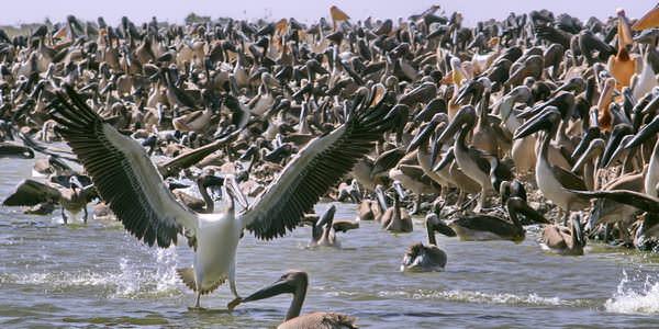 parc des oiseaux2