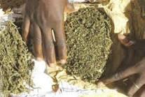 Guédiawaye: le mécanicien dealer alpagué avec 17 kg de drogue