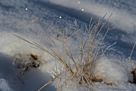 ice crystals, frozen, grass, snow, East Lake, Airdrie, Alberta