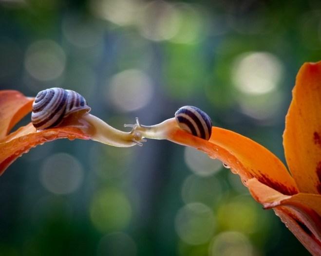 snail-18