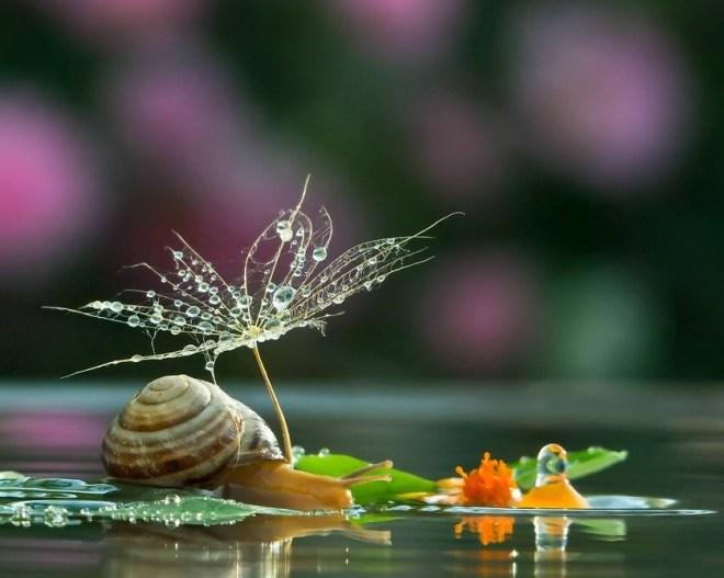 snail-19