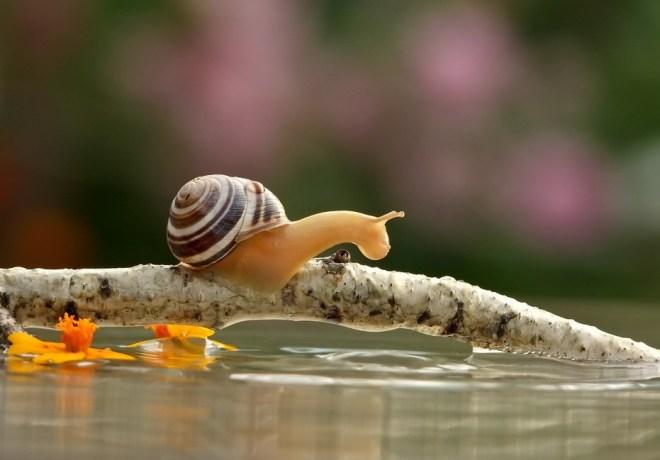 snail-21
