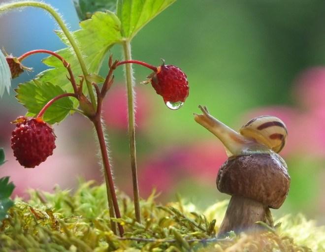 snail-6
